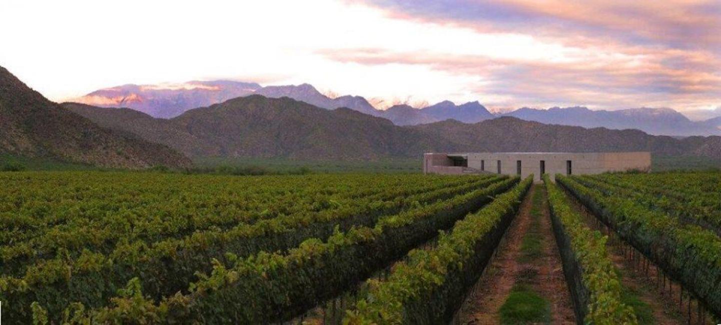 Chañarmuyo - Casa de Vino Paiman