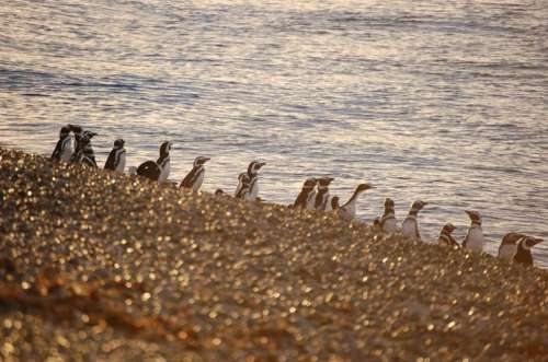Avistaje de pinguinos